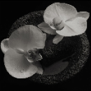 mike patton & jean-claude vannier - corpse flower (smoky swirl vinyl)