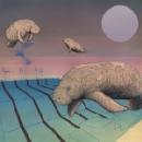 piscine - olympique