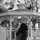 eddy detroit - black crow gazebo
