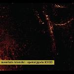 maurizio bianchi - apokalypsis XXIII