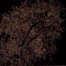 vipcancro - tropico