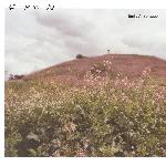 Emily A. Sprague - Hill, Flower, Fog