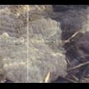 cremaster (ferran fages - alfredo costa monteiro) - noranta graus a l'esquerra