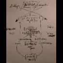 brassier - guionnet - murayama - mattin - idiomes / idiots (11 paragraphes pour un concert improvisé)