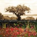 dave douglas quintet (+ aoife o'donovan) - be still