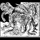 anaïs maviel - houle