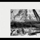 the bridge sessions 03 (shore to shore: mazurek - bowden - desprez - lux - sourisseau) - four views of a three sided garden