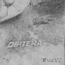 diptera - 001 [Antenna]