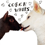 coachwhips - bangers vs. fuckers