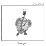 sons of frida - tortuga