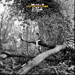 rodrigo amado (joe mcphee - kent kessler - chris corsano) - a history of nothing